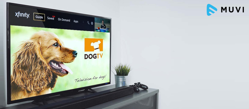 DogTV to launch a VOD offering on Comcast PayTV