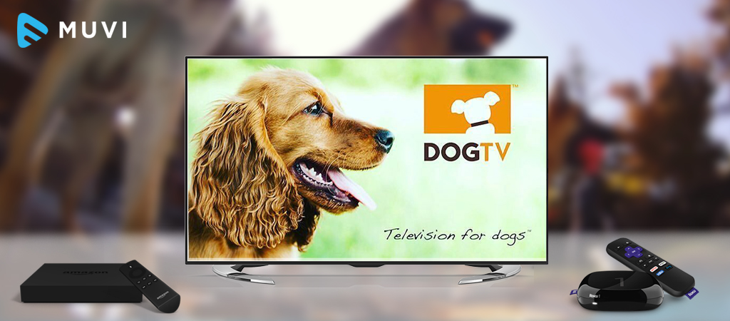 DogTV accessible on  Amazon Fire and Roku